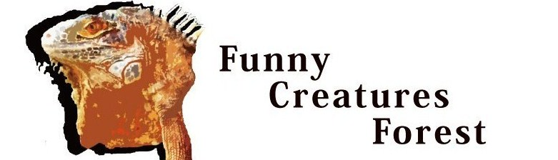 Funny Creatures Forest 神戸店